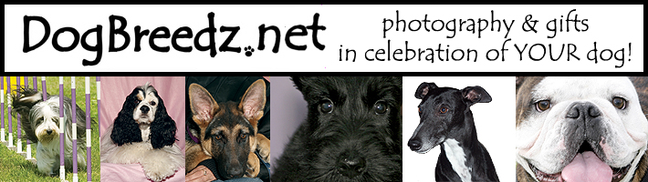 Visit DogBreedz.net - photography & gifts in celebration of YOUR pet!
